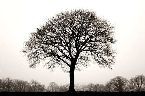 Perfect_tree_daveybot