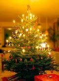 Danish Christmas Tree Wikipedia Malene Thyssen