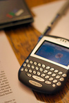 Blackberry_lance_mccord_4