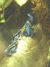 Frogs_mstresbabett_2