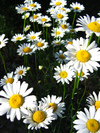Spring_scene_kruggg6_2