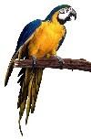 Parrot_1