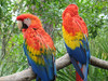 Parrots_andy_tinkham
